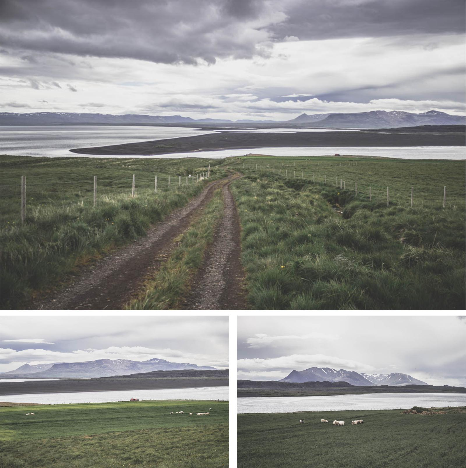 Phoques / Islande / Iceland / seals