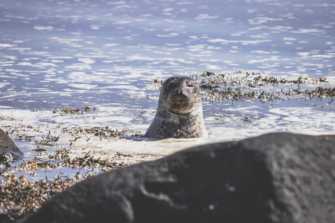 plage d'Ytri Tunga / Ytri Tunga beach / Snaefellsnes