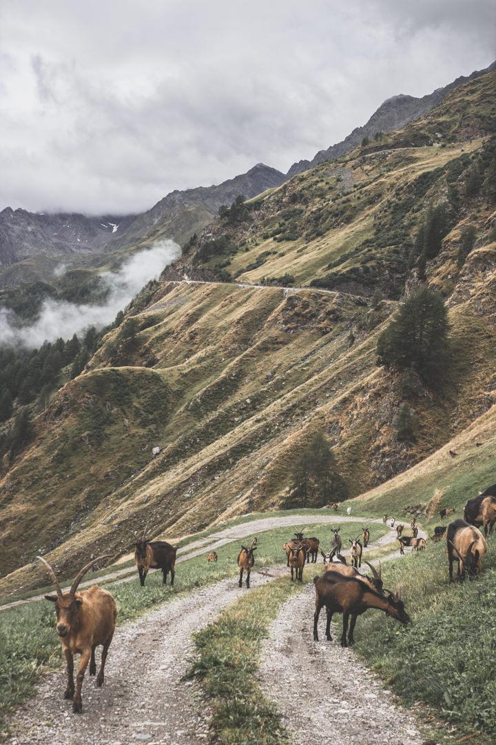 Col du Rombo, Italie, Autriche.